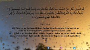 Nahl Suresi 10-11. ayet