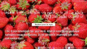 İbrahim Suresi 34. Ayet